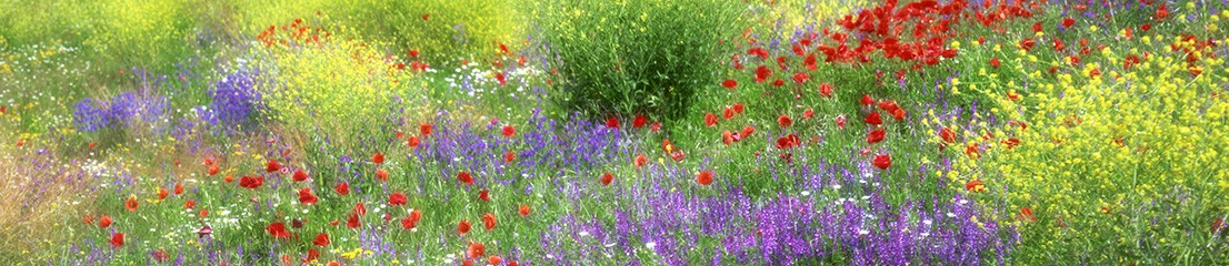 terapia florala
